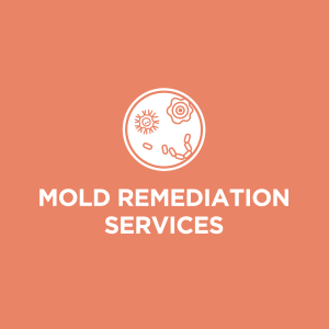 MOLD REMEDIATION AND MOLD REMOVAL atlanta