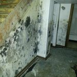 10 Useful Tips To Protect Your Basement from Mold in Atlanta, GA
