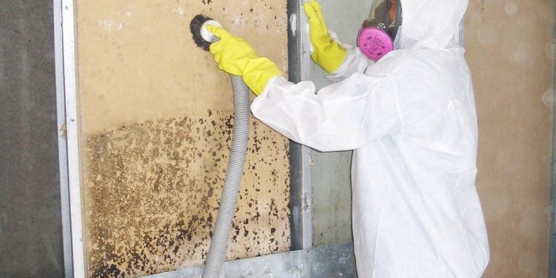 How does mold remediation work