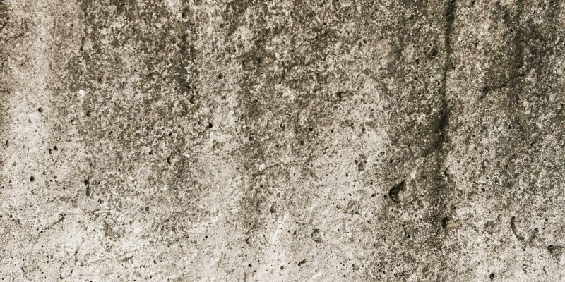How much does it cost to clean up mold