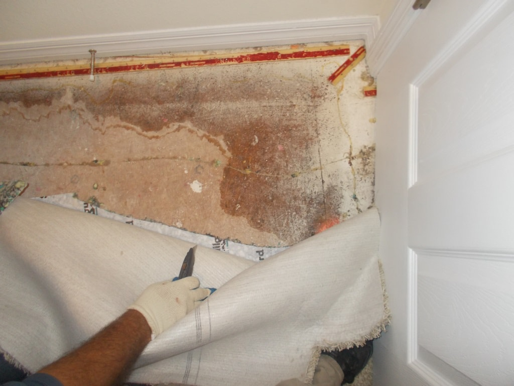 Effective Ways to Remove Mold from Your Walls